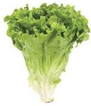 nutritional content of lettuce