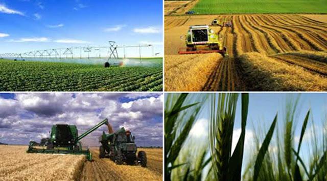 الزراعة في البلاد التونسية