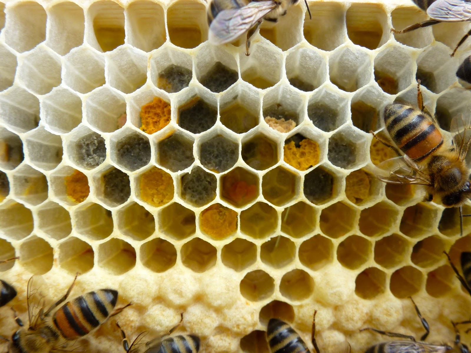 trogtrogbee summer pollen colours