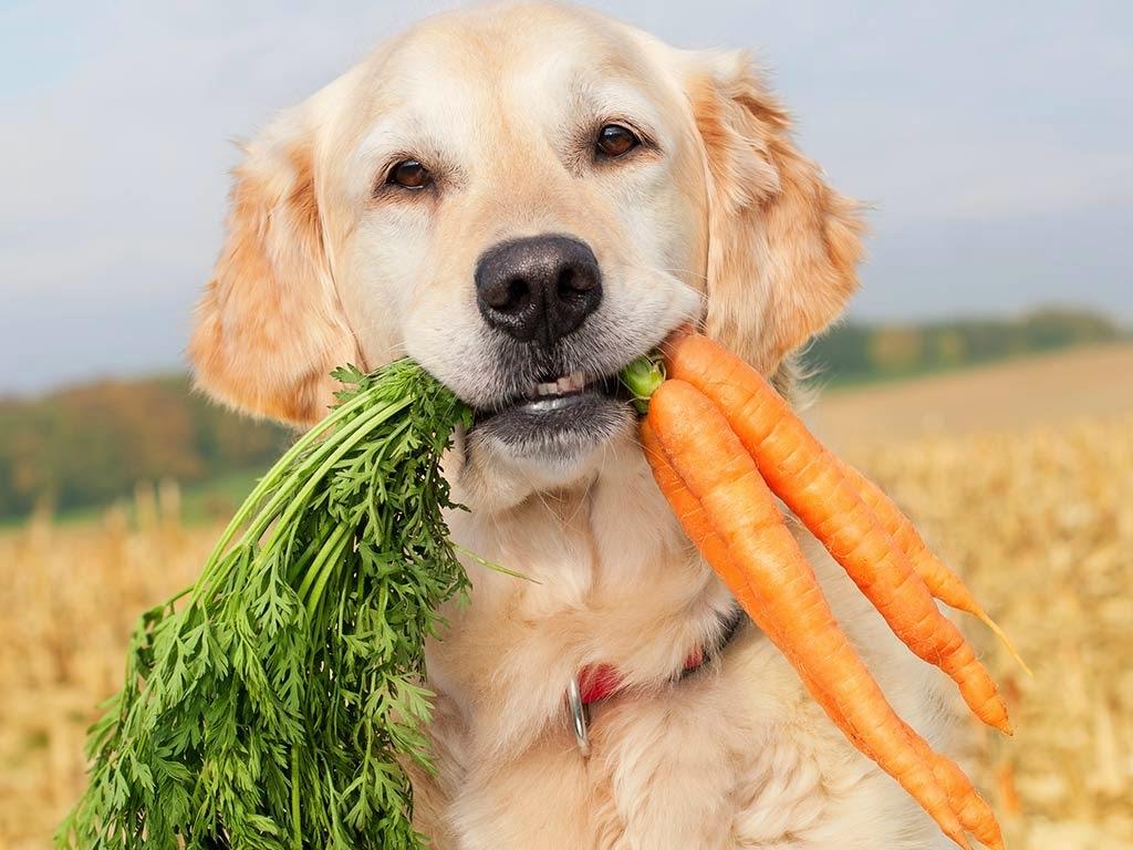 comida echar carnes cachorro