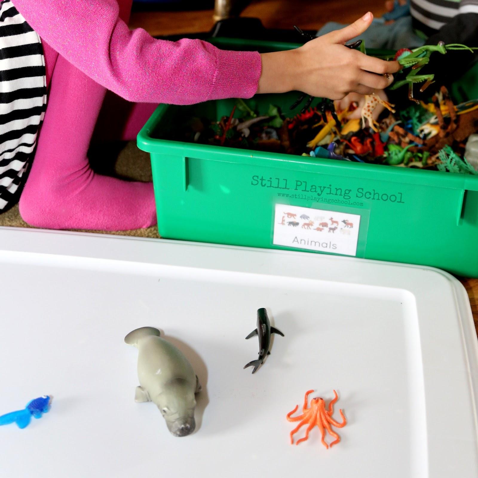Identifying Sorting And Classifying Marine Mammals