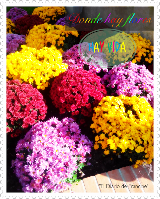 La foto de la semana: Colores.