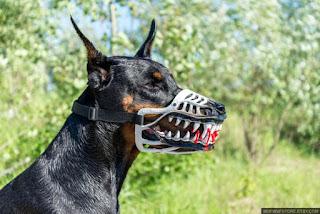 10 Jenis Anjing Paling Ganas versi Rawat Anjing