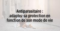 Antiparasitaire : adaptez sa protection en fonction de son mode de vie