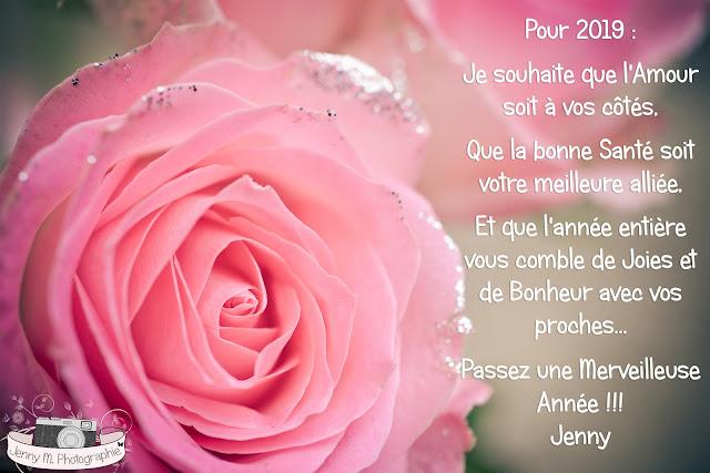 photo de rose rose pailletée photographe vendée 85 la chaize le vicomte