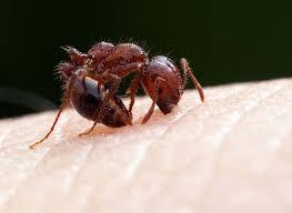 mengatasi gigitan serangga