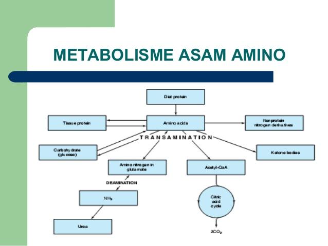Pengertian dan Proses Metabolisme Glukosa di Dalam Tubuh