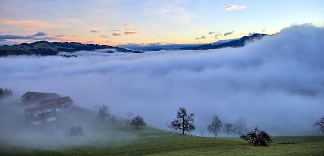 Bregenz Forest