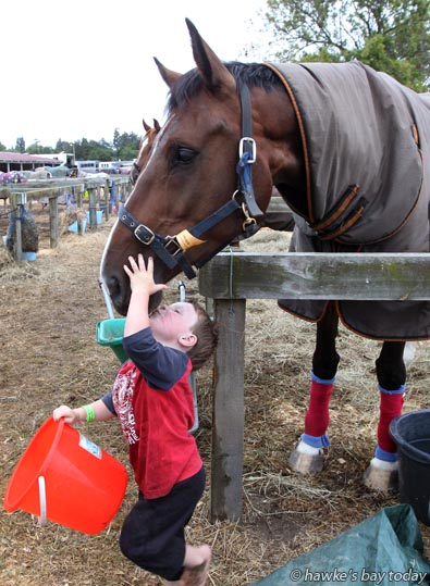 Tristan Ramsey, 3, Te Awamutu, watering Woodland Bug, a showjumper belonging to his aunt Emma Gaze, Te Awamutu, pictured at the Horse of the Year, at Hawke's Bay Showgrounds, Hastings. photograph