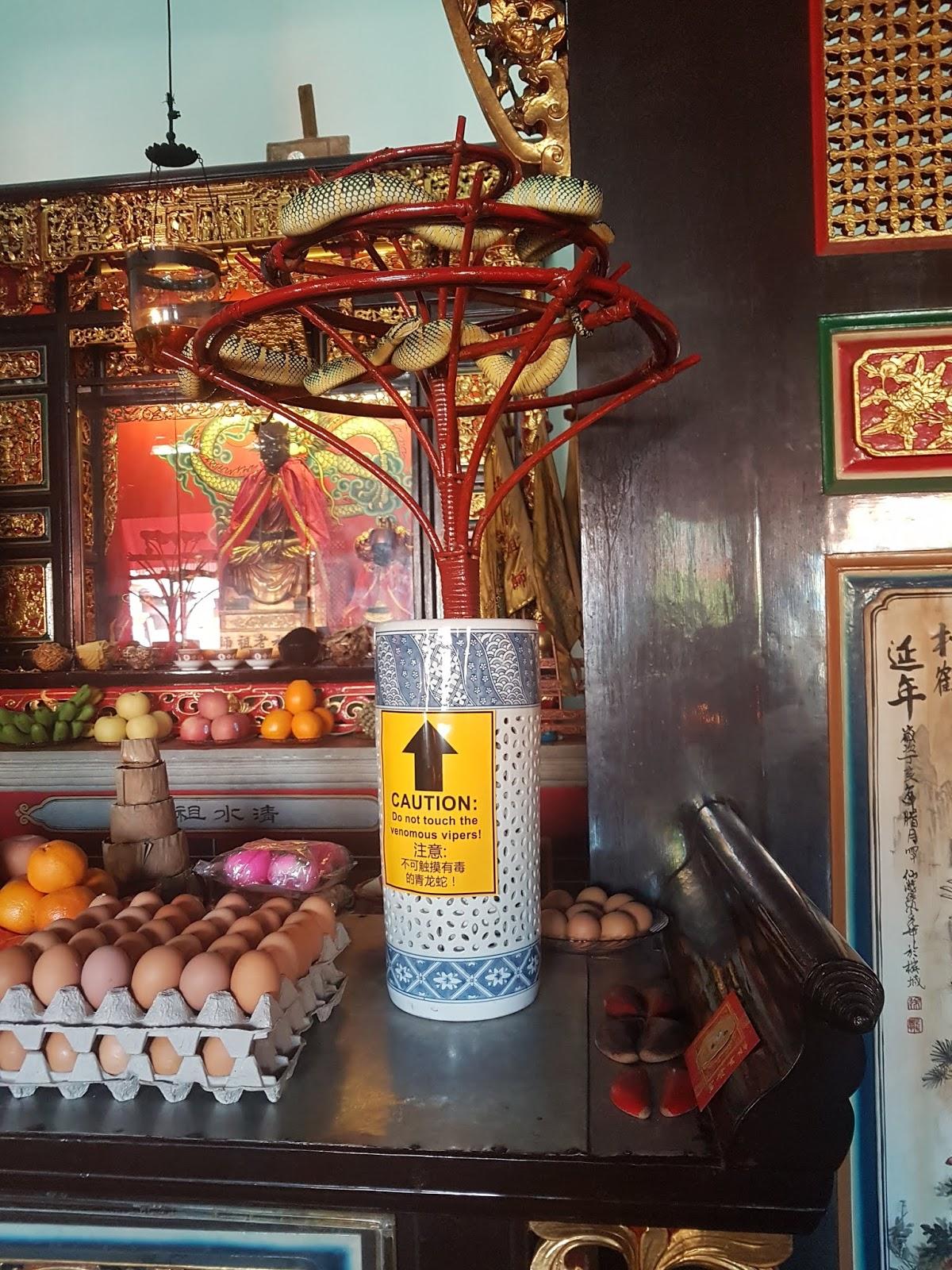 Vipers at Penang Snake Temple | Ummi Goes Where?