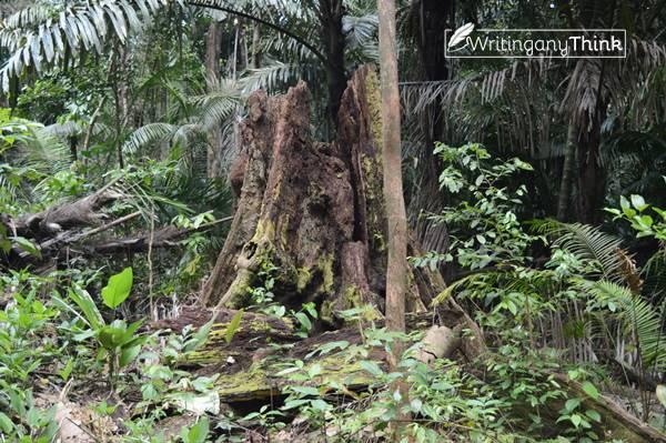Dilematika Konservasi Hutan dan Ketahanan Pangan
