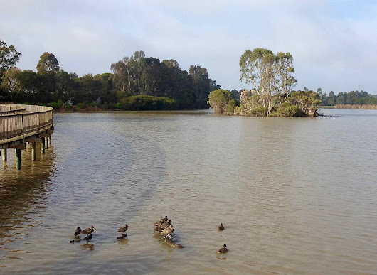 Freckeld Duck Lake Guyatt, Sale