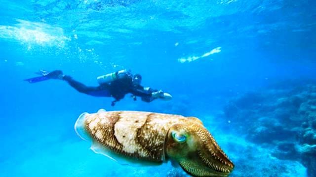 ท่องเที่ยว, แนวหินปะการัง, มัลดีฟส์, สถานที่ดำน้ำ, สถานดำน้ำทั่วโลก, อันดับสถานที่ดำน้ำ, ปาเลา ไมโครนีเซีย (Palau, Micronesia)