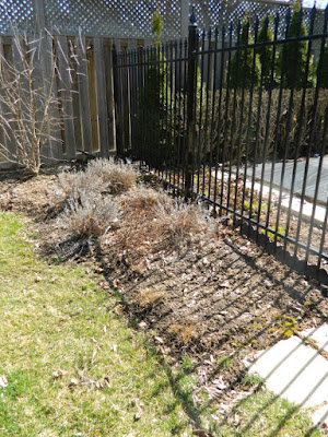 North York spring garden clean up after by Paul Jung Gardening Services Toronto