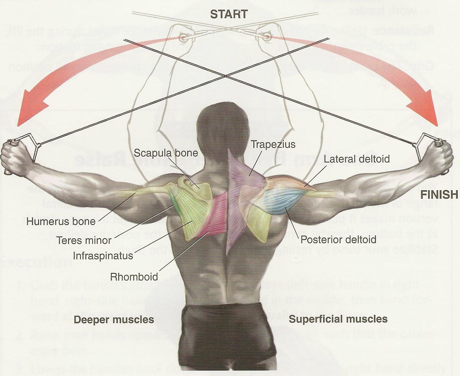 True To The Bone Shoulder Workout Log 30 1