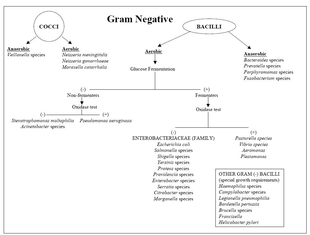 Bacteria Identification Chart Homeschoolingforfree