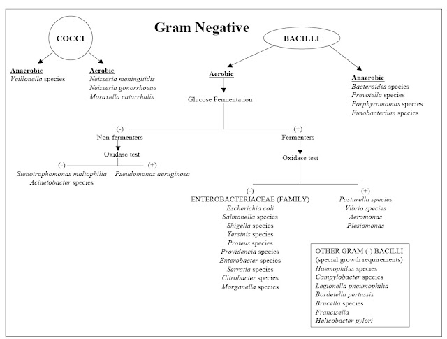My scientific blog research and articles identification chart identification chart of gram negative bacteria ccuart Gallery
