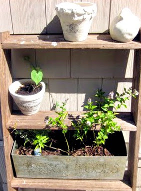Old wooden ladder with pots and plants