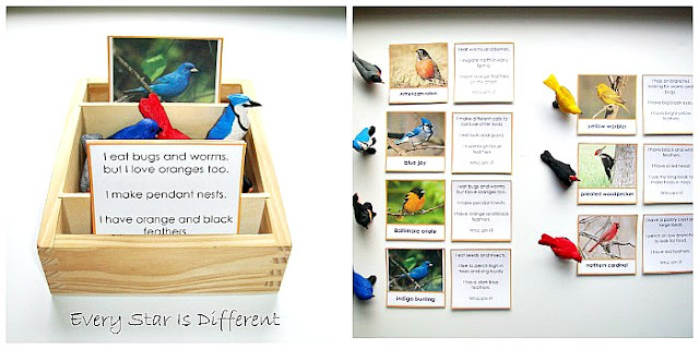 "Montessori Bird ""Who Am I?"" Cards (Free Printable)"