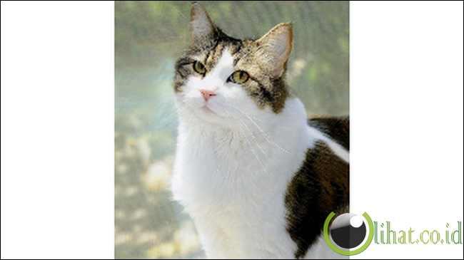 Oscar the Cat (Mampu Menebak Kematian Pasien)