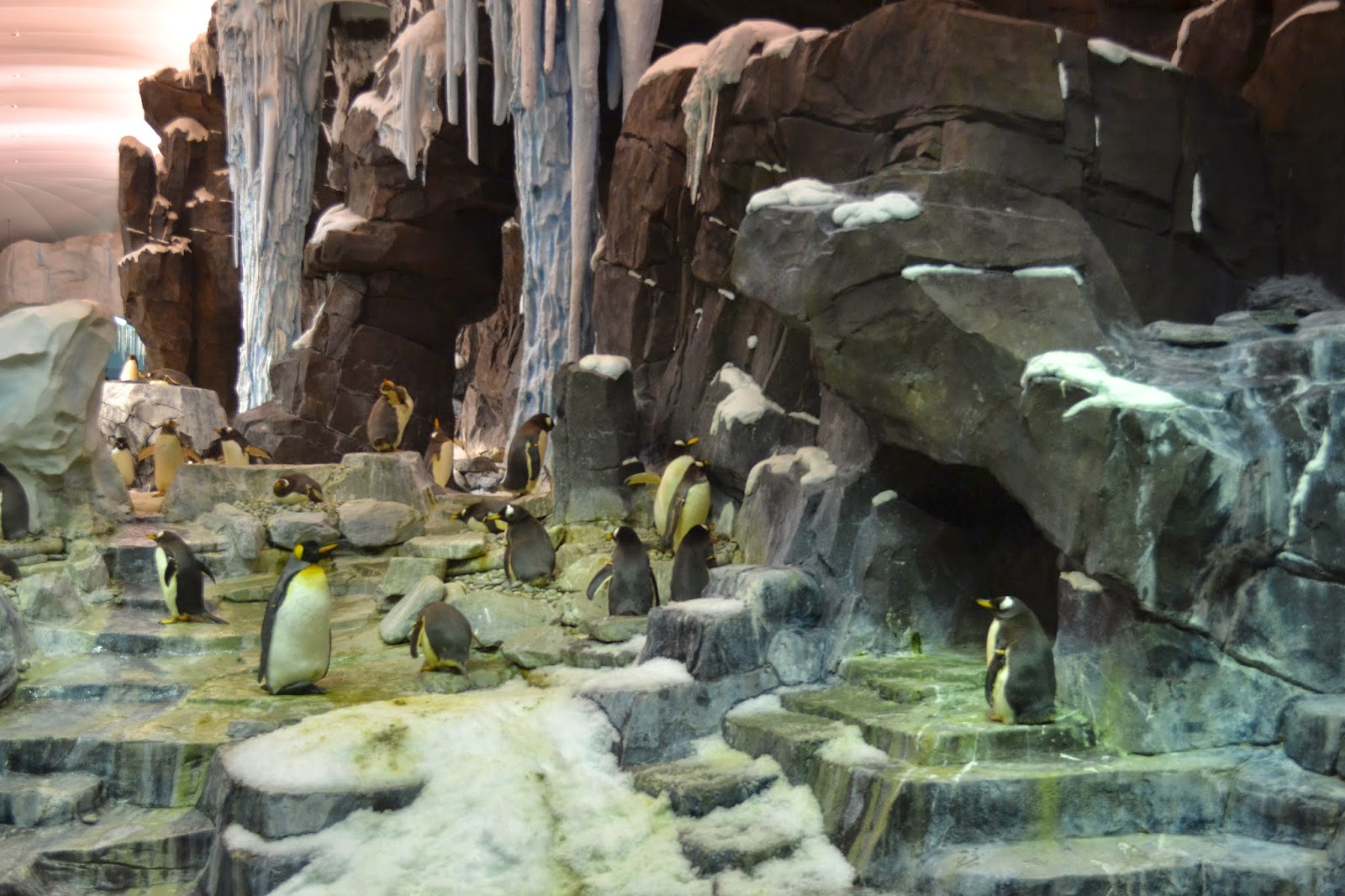 Penguins at SeaWorld Orlando