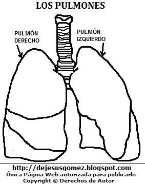 Dibujo pulmones para colorear pintar imprimir. Dibujo de pulmones hecho por jesus Gómez