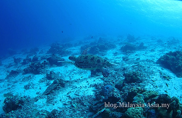 Dive Photos of Mataking Island