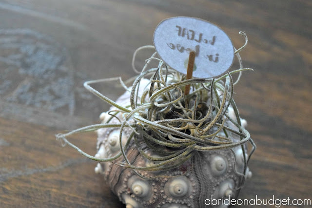 "Air plants are such a great wedding favor idea. Find out about them and get a free ""beLEAF in love"" wedding favor tag at www.abrideonabudget.com."
