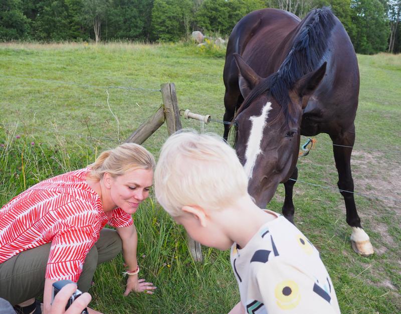 hevosia syöttämässä