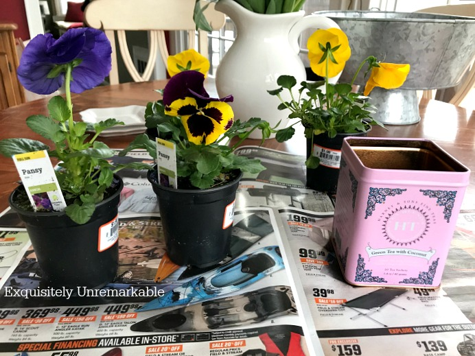 Pansies in pots on kitchen table
