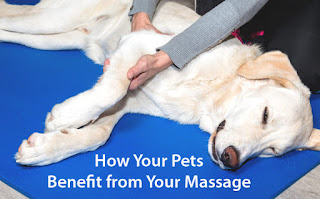A relaxed pet benefitting from a massage