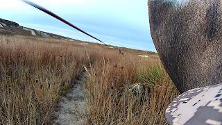 flying arrow at deer using decoy