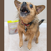 The Honest Kitchen Joyful Jerky Dog Treats Review