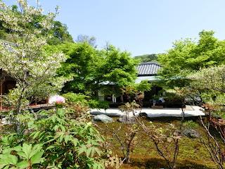 長壽寺の新緑