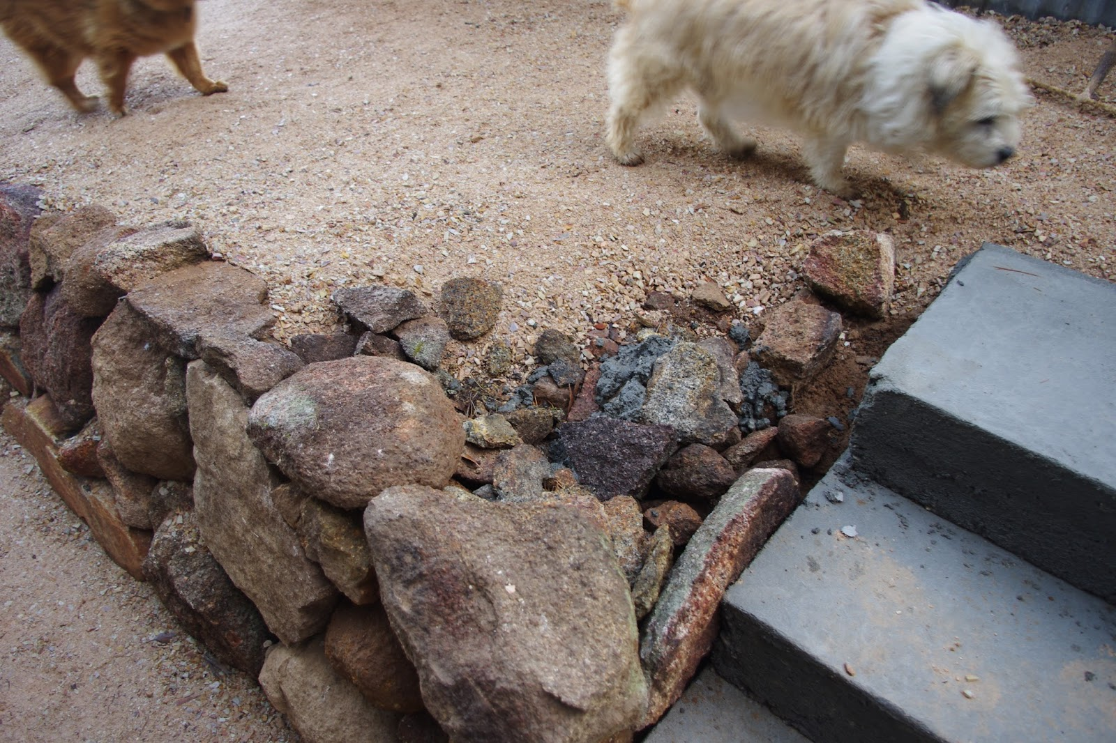 Sir Scruffy and Poopy check out the new retaining wall