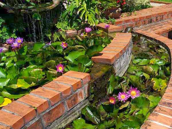 Water Lily garden wall