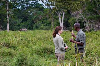 Congo Brazavile The African Experience Open Comunicación elefante