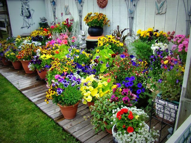 My Nine Tips For Successful Container Gardening This Midwestern Girl