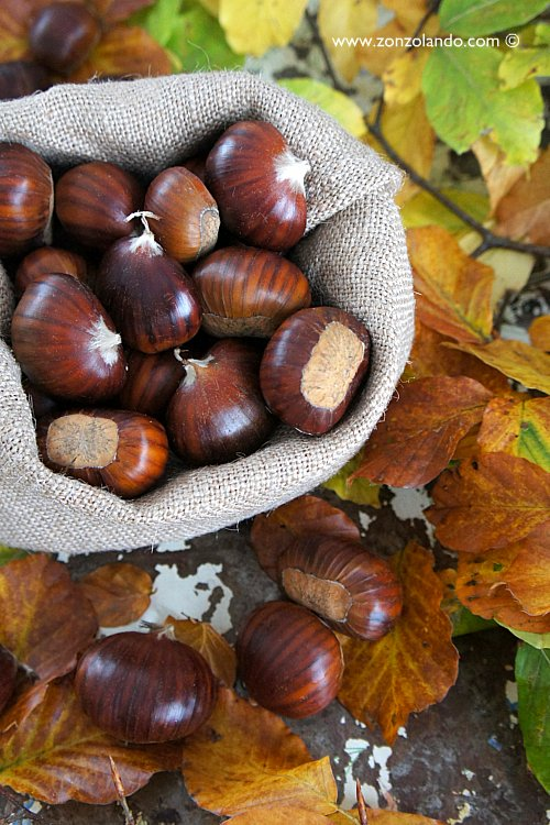 Castagne nei ricci bosco raccolta - chestnuts