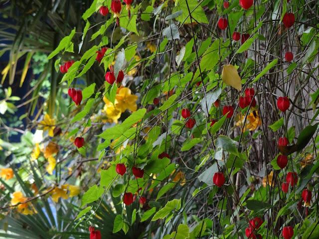 joli mois de mai, le jardin fait à son gré - Page 4 DSC07525