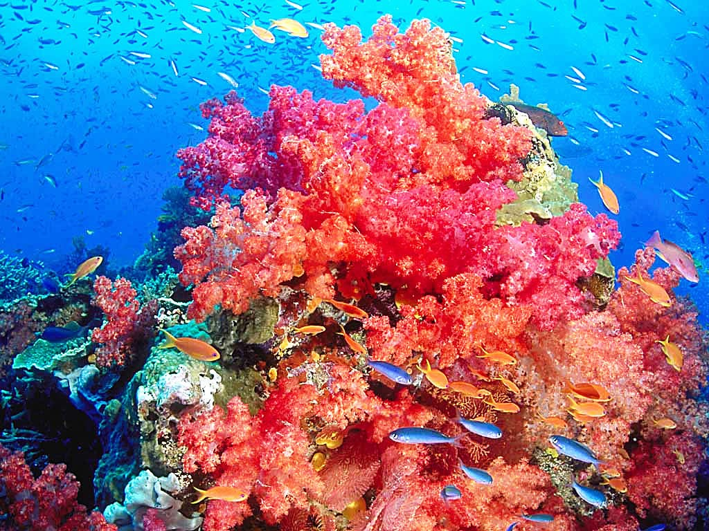 Coral reef earth blog - Sea coral wallpaper ...