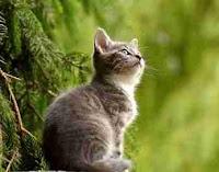 Tips Untuk Memegang Dan Menggendong Seekor Kucing