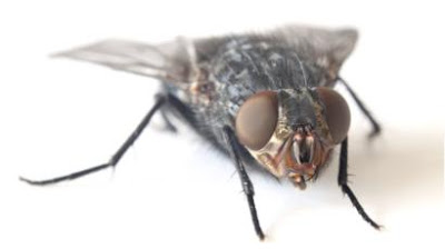 Why is it so hard to swat a fly