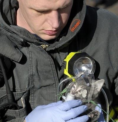 Penyelamatan kucing!