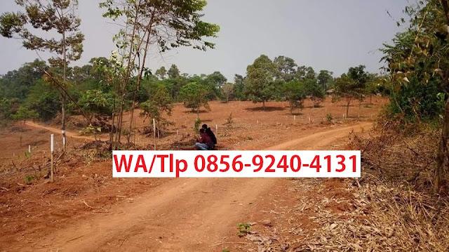 Investasi Kebun Agrowisata Kavling Buah lantaburo Karyamekar Cariu - Lantaburo Propertindo