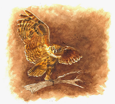 Owl_Susan Perez