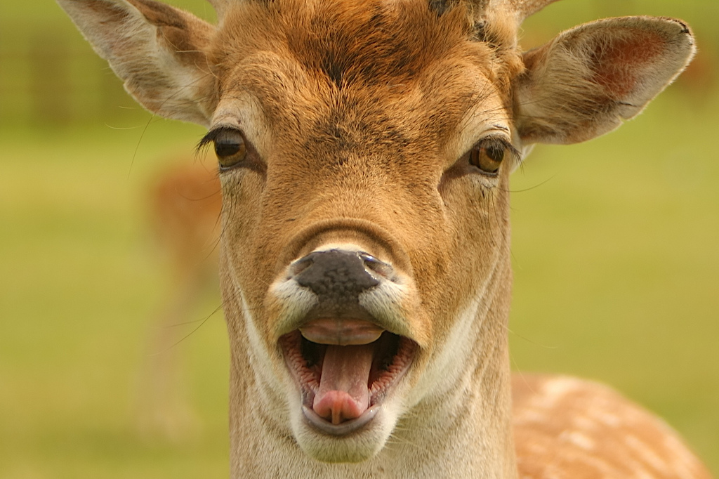 Deer | New Funniest Photographs | Funny And Cute Animals