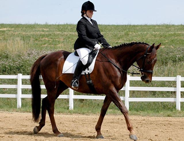 Arti Mimpi Menunggang Kuda