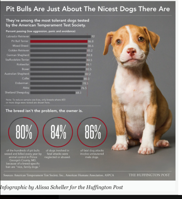 Pit Bulls Are Just About The Nicest Dogs There From Huffington Post