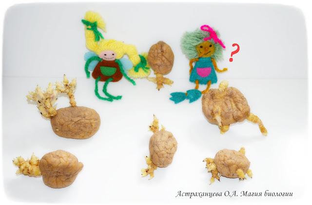 tvorcheskie-igry-s-kartoshkoj-magiya-biologii-картошка с ростками-игра-метафорическое мышление